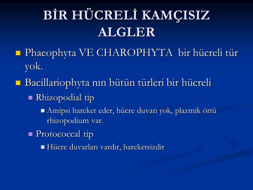 BİR HÜCRELİ KAMÇISIZ ALGLER