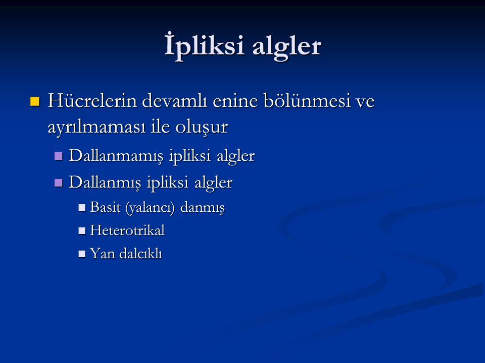 İpliksi algler Hücrelerin devamlı enine bölünmesi ve ayrılmaması ile oluşur. Dallanmamış ipliksi algler.