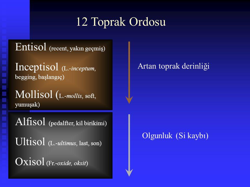 12 Toprak Ordosu Entisol (recent, yakın geçmiş)