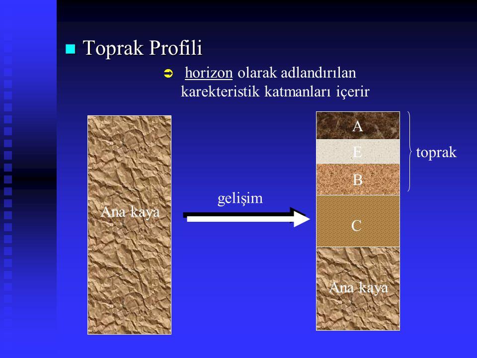 Toprak Profili horizon olarak adlandırılan karekteristik katmanları içerir. A. E. toprak. B. gelişim.
