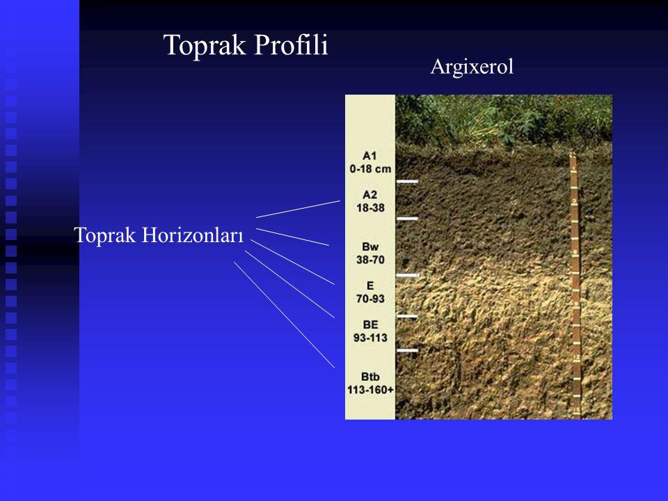 Toprak Profili Argixerol Toprak Horizonları
