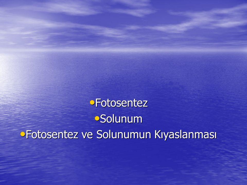 Fotosentez Solunum Fotosentez ve Solunumun Kıyaslanması