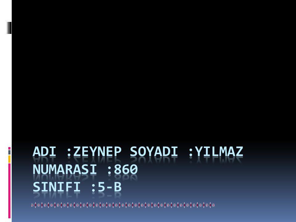 ADI :ZEYNEP SOYADI :YILMAZ NUMARASI :860 SINIFI :5-B