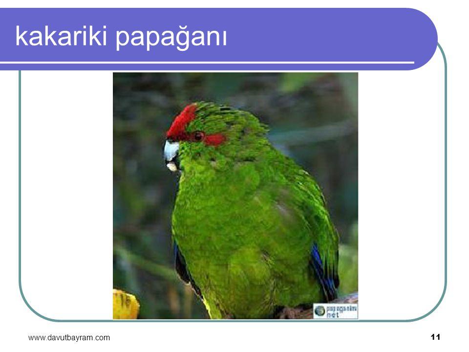 kakariki papağanı www.davutbayram.com