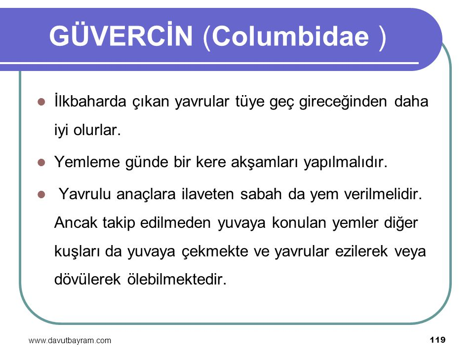 GÜVERCİN (Columbidae )