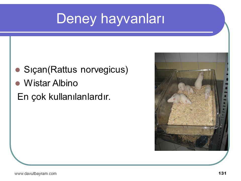 Deney hayvanları Sıçan(Rattus norvegicus) Wistar Albino