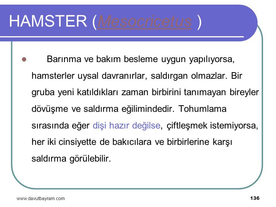 HAMSTER (Mesocricetus )