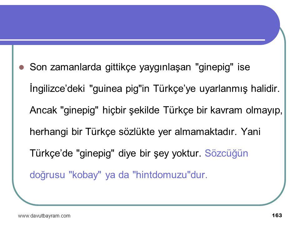 Son zamanlarda gittikçe yaygınlaşan ginepig ise İngilizce'deki guinea pig in Türkçe'ye uyarlanmış halidir. Ancak ginepig hiçbir şekilde Türkçe bir kavram olmayıp, herhangi bir Türkçe sözlükte yer almamaktadır. Yani Türkçe'de ginepig diye bir şey yoktur. Sözcüğün doğrusu kobay ya da hintdomuzu dur.