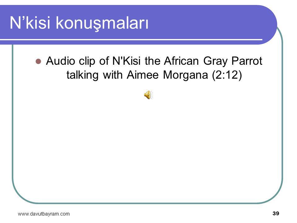 N'kisi konuşmaları Audio clip of N Kisi the African Gray Parrot talking with Aimee Morgana (2:12) www.davutbayram.com.