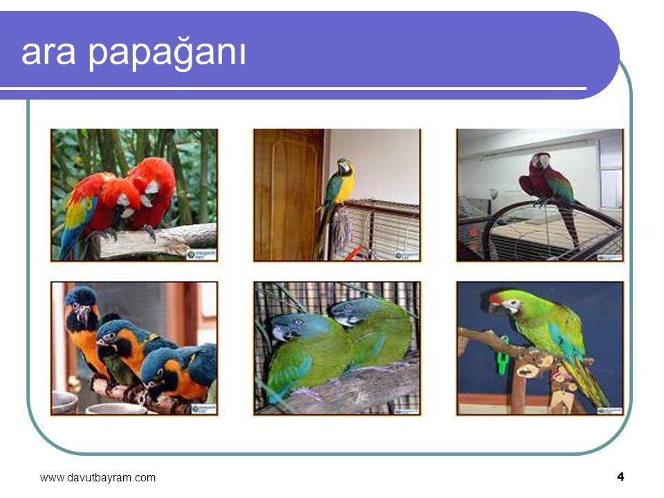 ara papağanı www.davutbayram.com