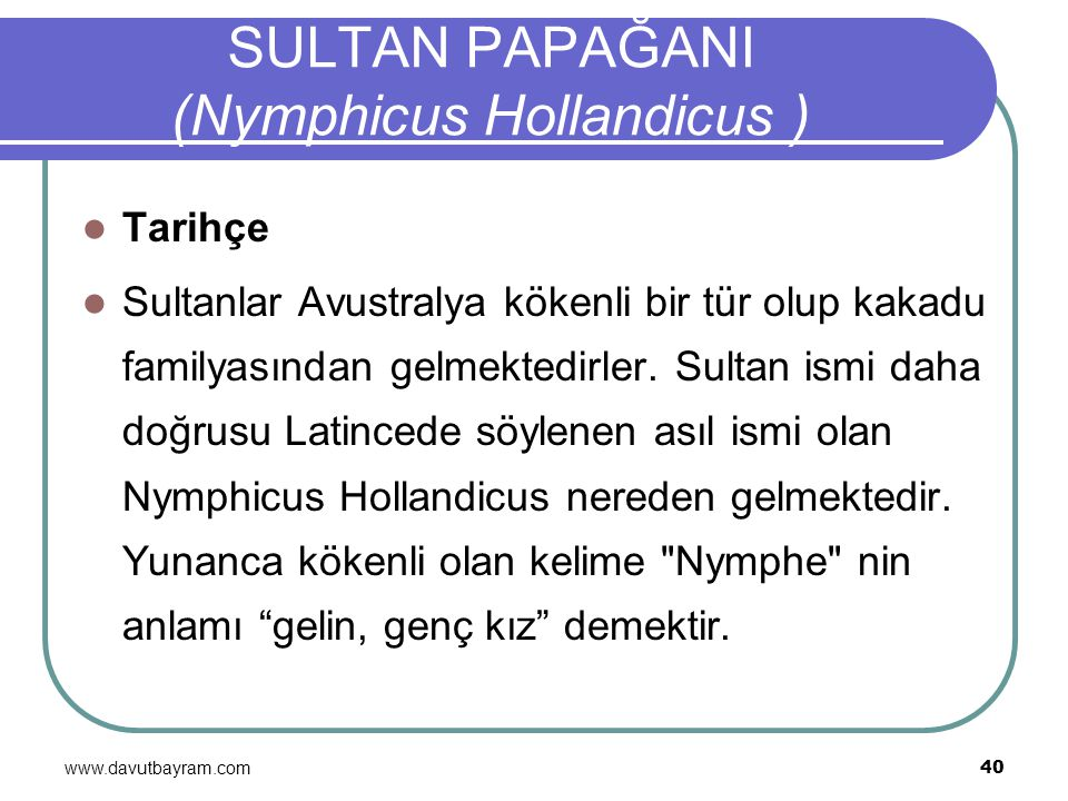 SULTAN PAPAĞANI (Nymphicus Hollandicus )