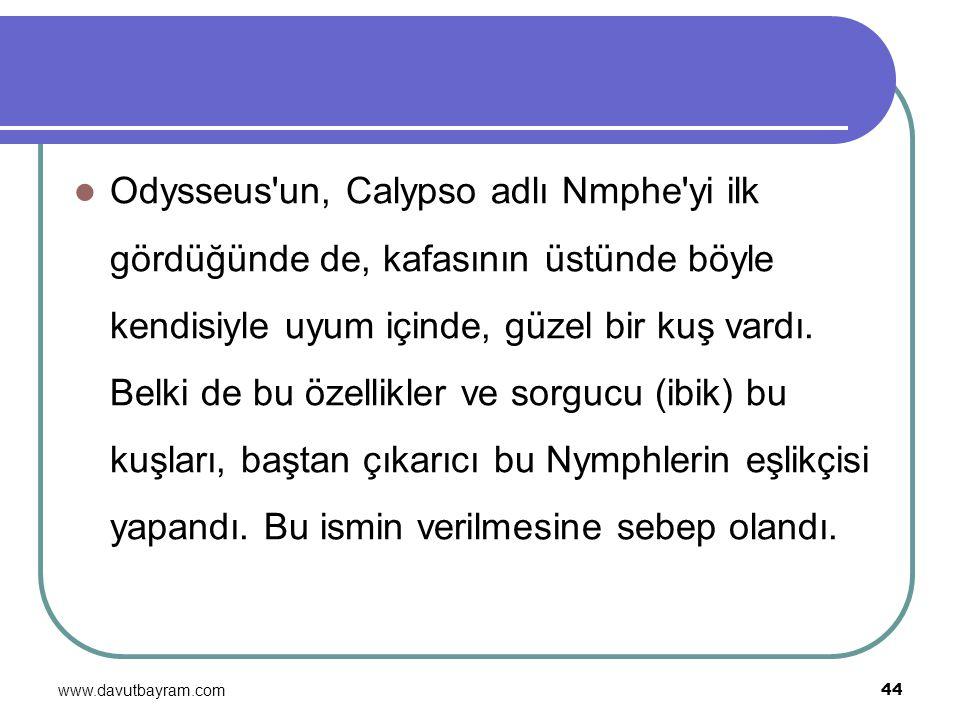 Odysseus un, Calypso adlı Nmphe yi ilk gördüğünde de, kafasının üstünde böyle kendisiyle uyum içinde, güzel bir kuş vardı. Belki de bu özellikler ve sorgucu (ibik) bu kuşları, baştan çıkarıcı bu Nymphlerin eşlikçisi yapandı. Bu ismin verilmesine sebep olandı.