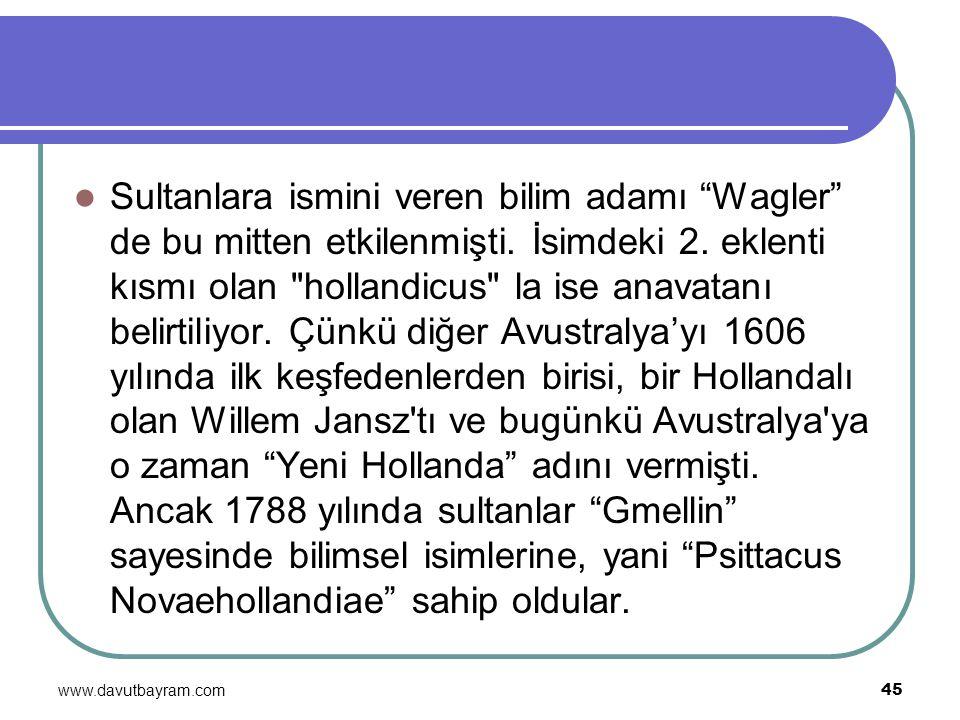 Sultanlara ismini veren bilim adamı Wagler de bu mitten etkilenmişti