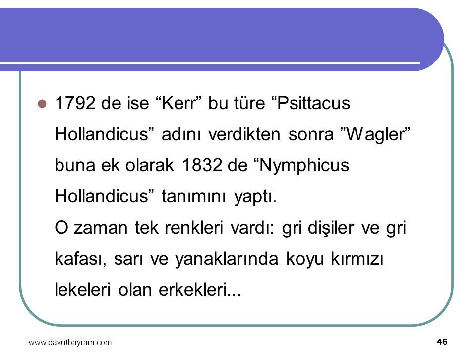 1792 de ise Kerr bu türe Psittacus Hollandicus adını verdikten sonra Wagler buna ek olarak 1832 de Nymphicus Hollandicus tanımını yaptı. O zaman tek renkleri vardı: gri dişiler ve gri kafası, sarı ve yanaklarında koyu kırmızı lekeleri olan erkekleri...