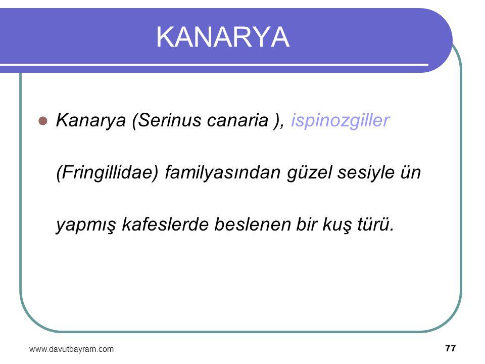 KANARYA Kanarya (Serinus canaria ), ispinozgiller (Fringillidae) familyasından güzel sesiyle ün yapmış kafeslerde beslenen bir kuş türü.