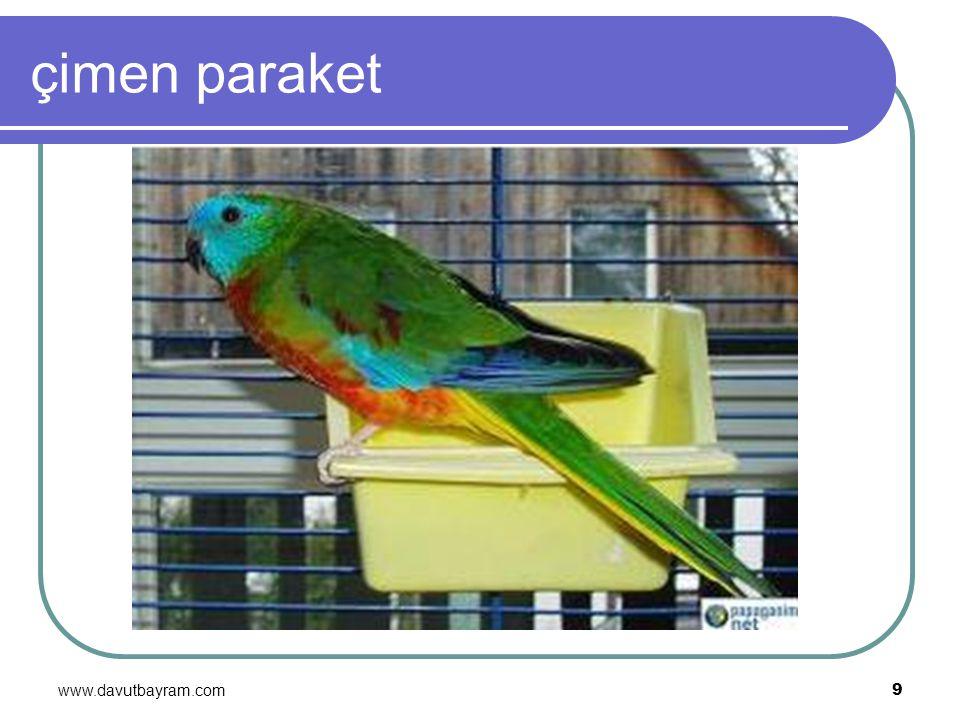 çimen paraket www.davutbayram.com