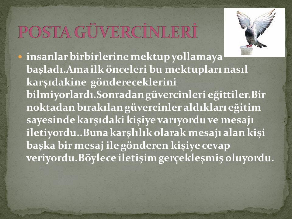 POSTA GÜVERCİNLERİ