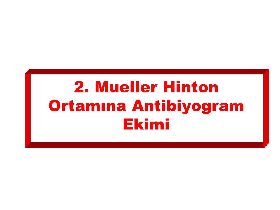 2. Mueller Hinton Ortamına Antibiyogram Ekimi