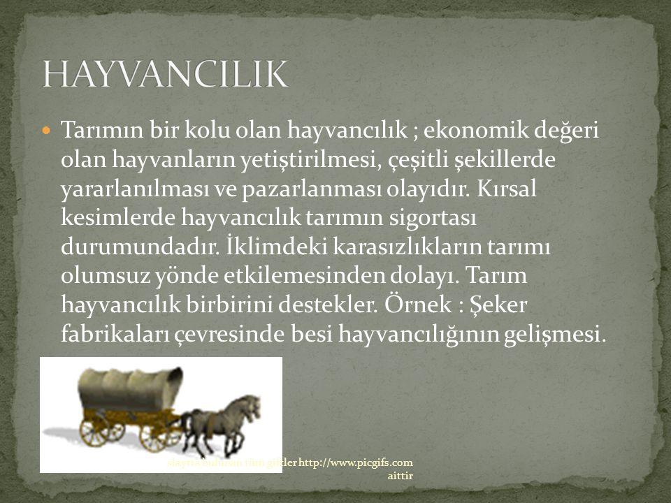 HAYVANCILIK