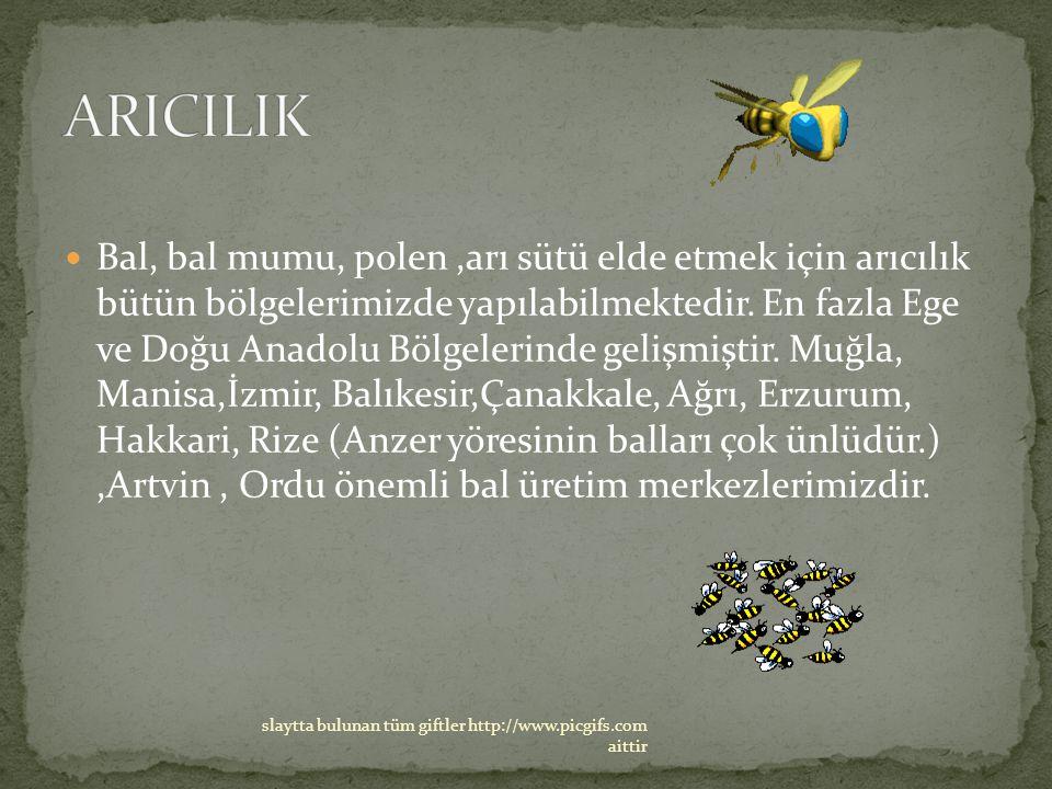 ARICILIK