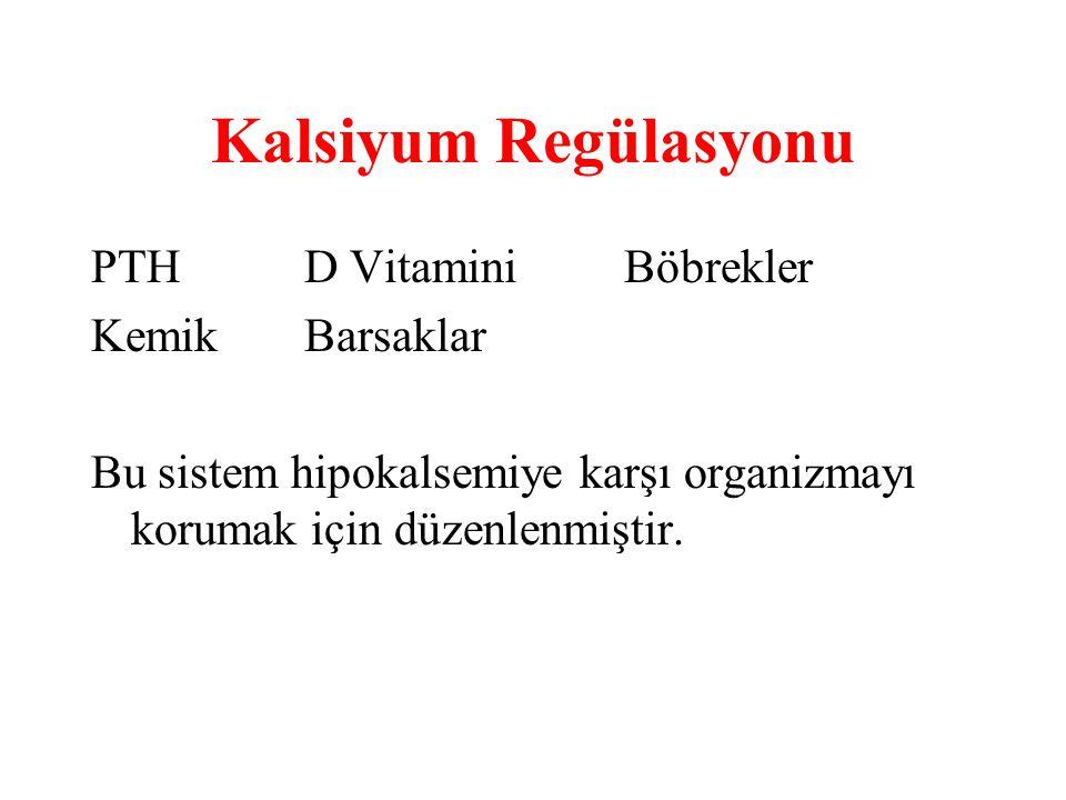 Kalsiyum Regülasyonu PTH D Vitamini Böbrekler Kemik Barsaklar
