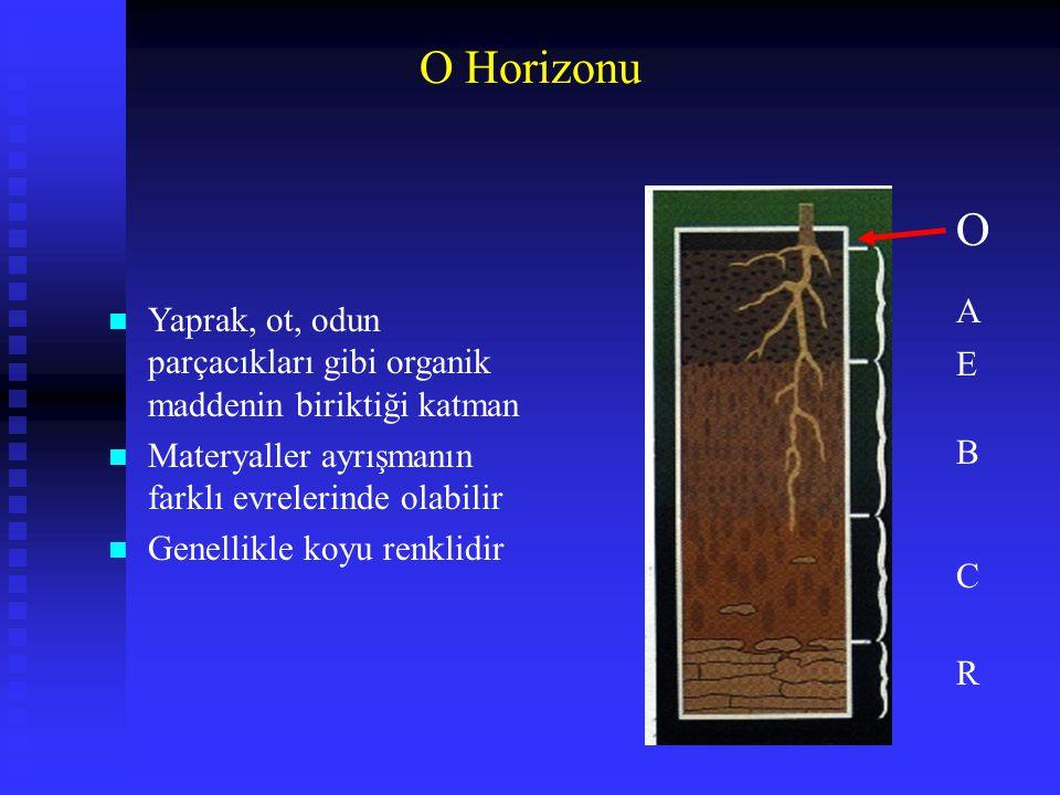 O Horizonu O. A. Yaprak, ot, odun parçacıkları gibi organik maddenin biriktiği katman. Materyaller ayrışmanın farklı evrelerinde olabilir.
