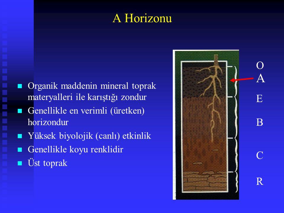 A Horizonu O. A. Organik maddenin mineral toprak materyalleri ile karıştığı zondur. Genellikle en verimli (üretken) horizondur.