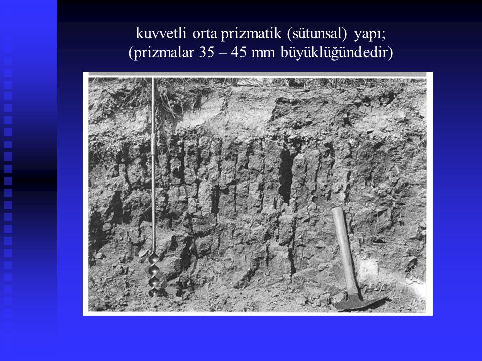 kuvvetli orta prizmatik (sütunsal) yapı;