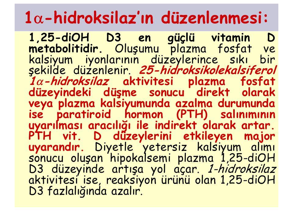 1-hidroksilaz'ın düzenlenmesi: