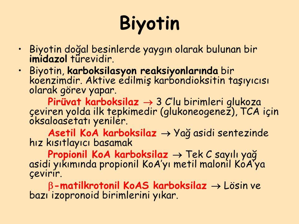 Biyotin Biyotin doğal besinlerde yaygın olarak bulunan bir imidazol türevidir.