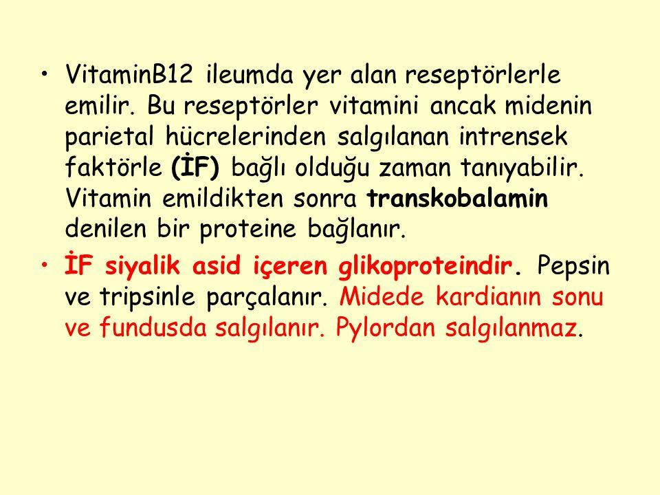 VitaminB12 ileumda yer alan reseptörlerle emilir