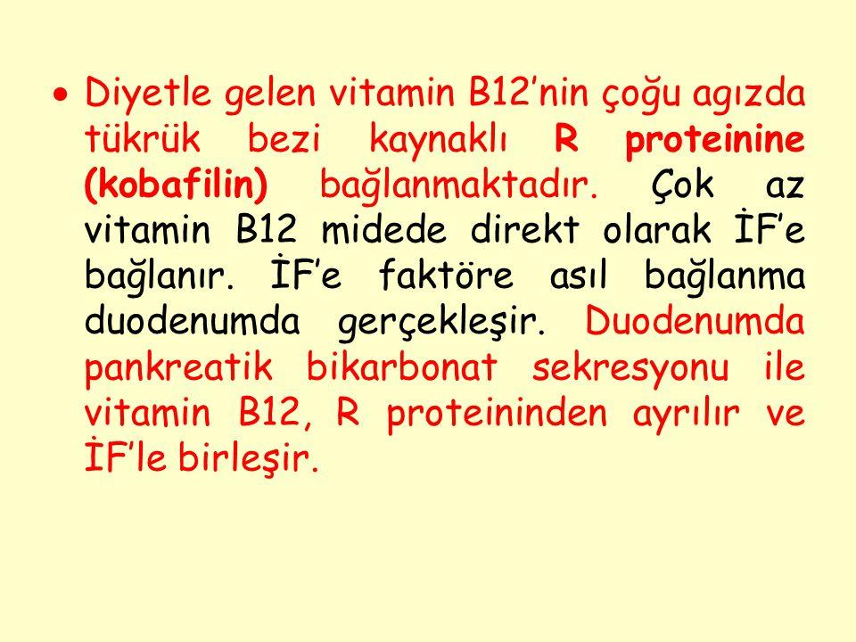 Diyetle gelen vitamin B12'nin çoğu agızda tükrük bezi kaynaklı R proteinine (kobafilin) bağlanmaktadır.