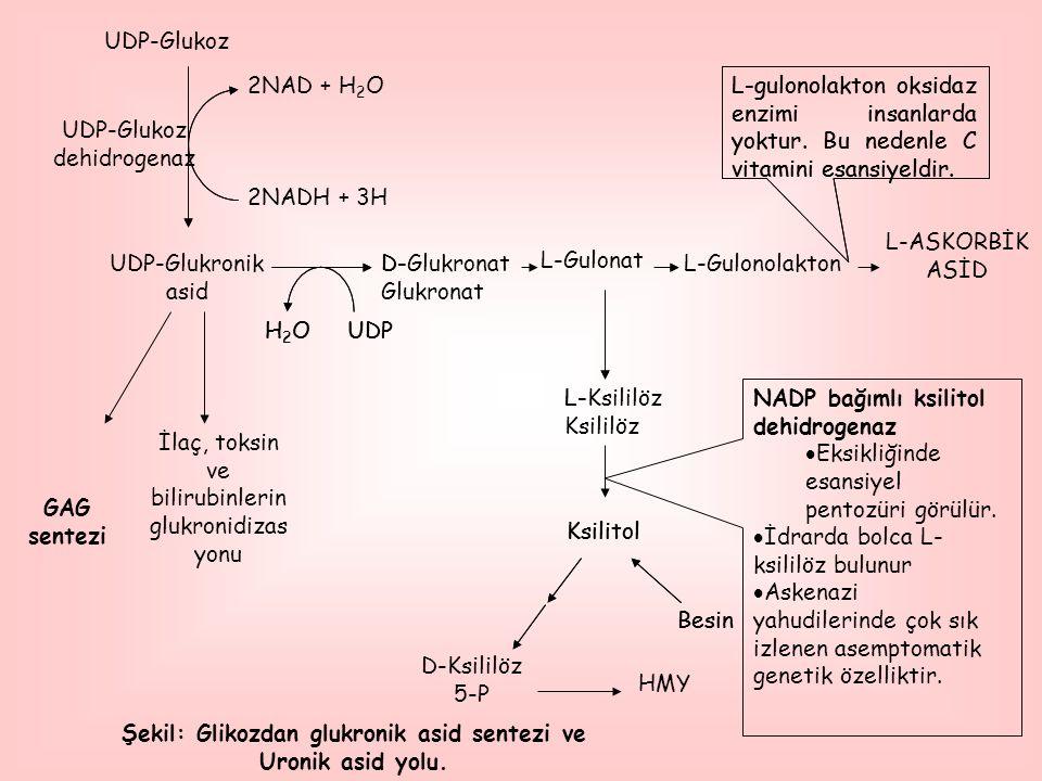 Şekil: Glikozdan glukronik asid sentezi ve Uronik asid yolu.
