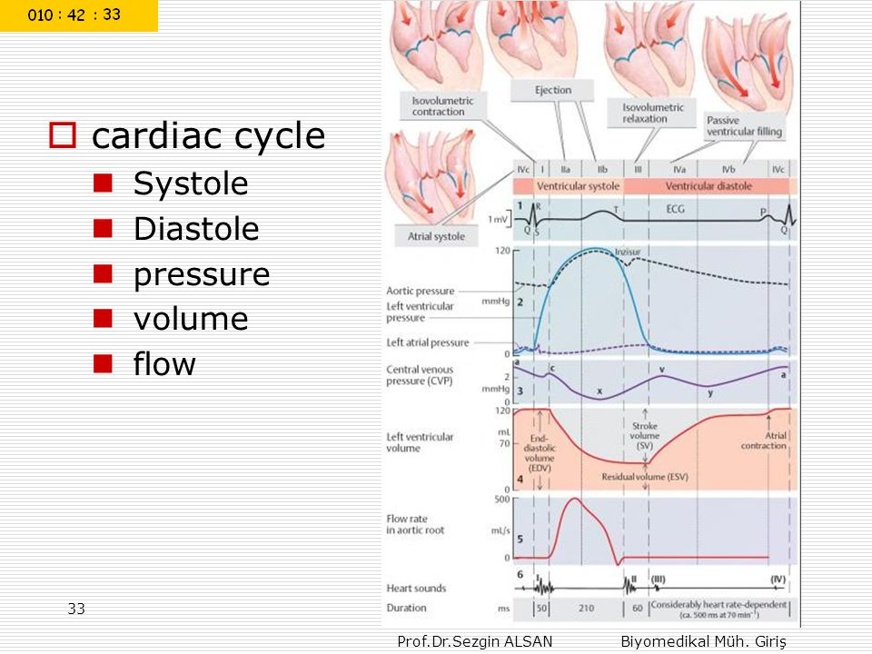 cardiac cycle Systole Diastole pressure volume flow