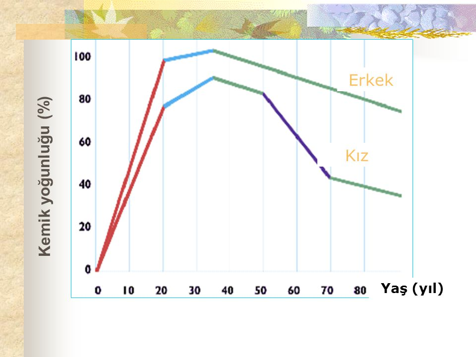 Erkek Kız Kemik yoğunluğu (%) Yaş (yıl)