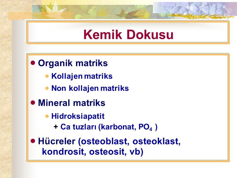 Kemik Dokusu  Organik matriks  Mineral matriks