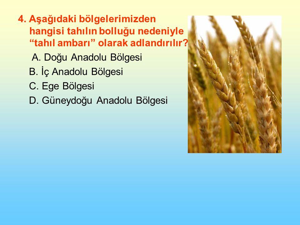 4. Aşağıdaki bölgelerimizden hangisi tahılın bolluğu nedeniyle tahıl ambarı olarak adlandırılır