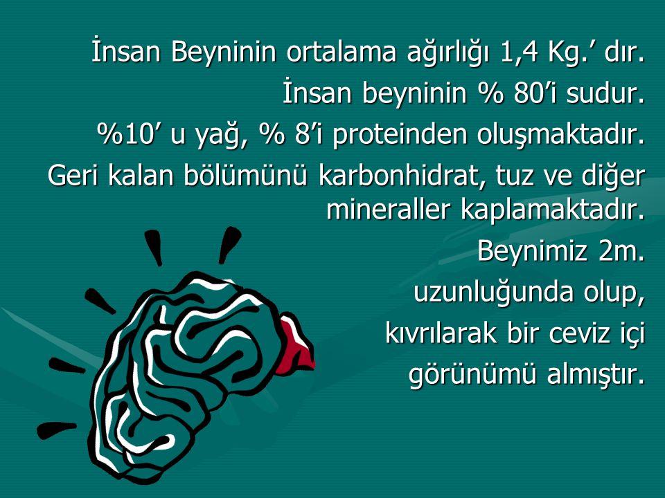 İnsan Beyninin ortalama ağırlığı 1,4 Kg.' dır.