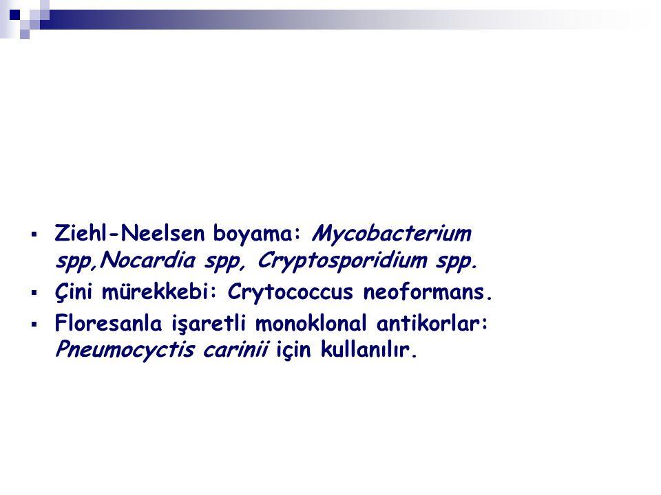 Ziehl-Neelsen boyama: Mycobacterium spp,Nocardia spp, Cryptosporidium spp.