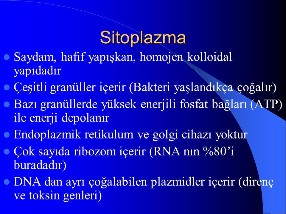 Sitoplazma Saydam, hafif yapışkan, homojen kolloidal yapıdadır