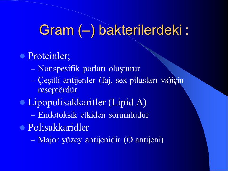 Gram (–) bakterilerdeki :
