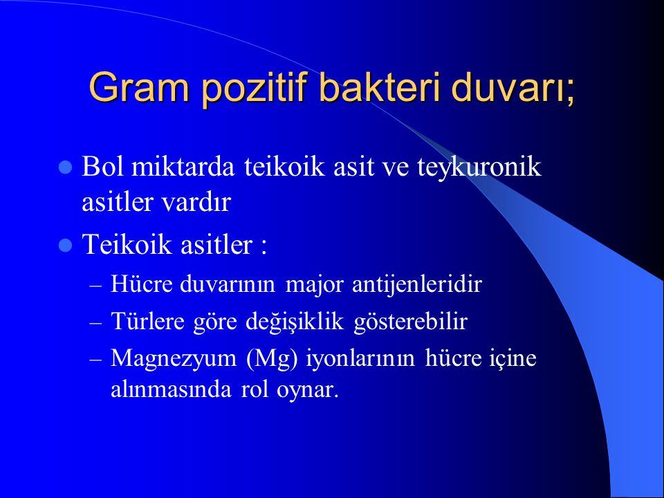 Gram pozitif bakteri duvarı;
