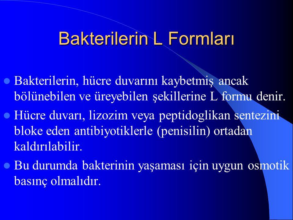 Bakterilerin L Formları