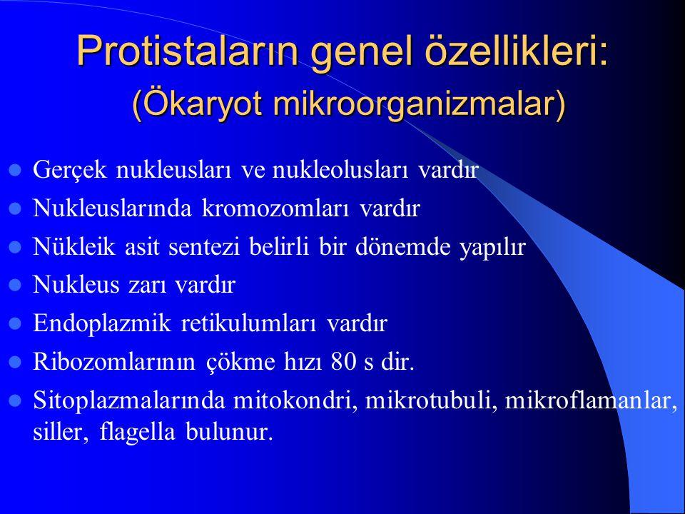 Protistaların genel özellikleri: (Ökaryot mikroorganizmalar)