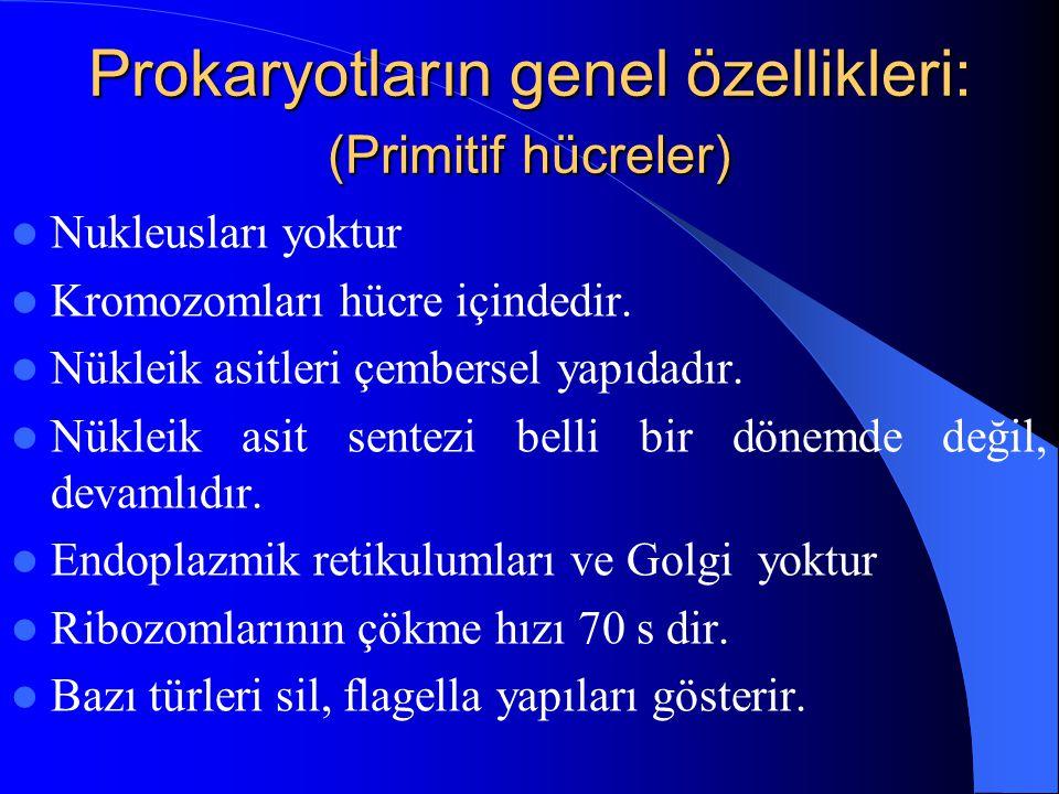 Prokaryotların genel özellikleri: (Primitif hücreler)