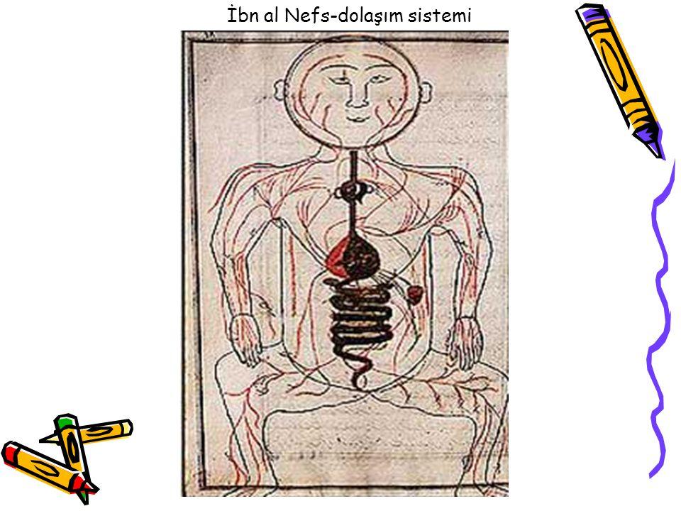 İbn al Nefs-dolaşım sistemi