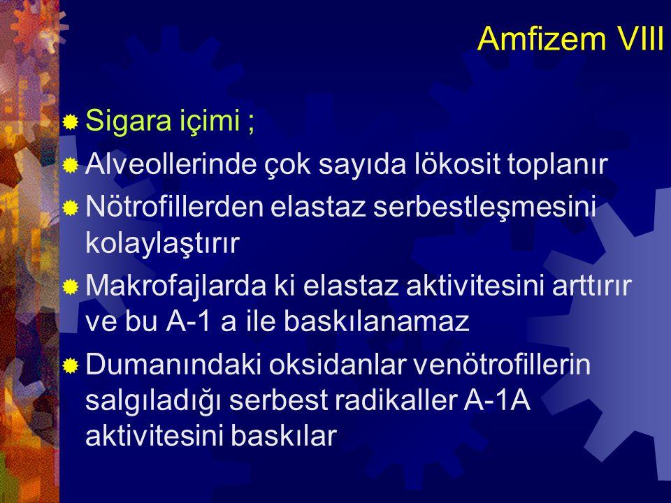 Amfizem VIII Sigara içimi ; Alveollerinde çok sayıda lökosit toplanır