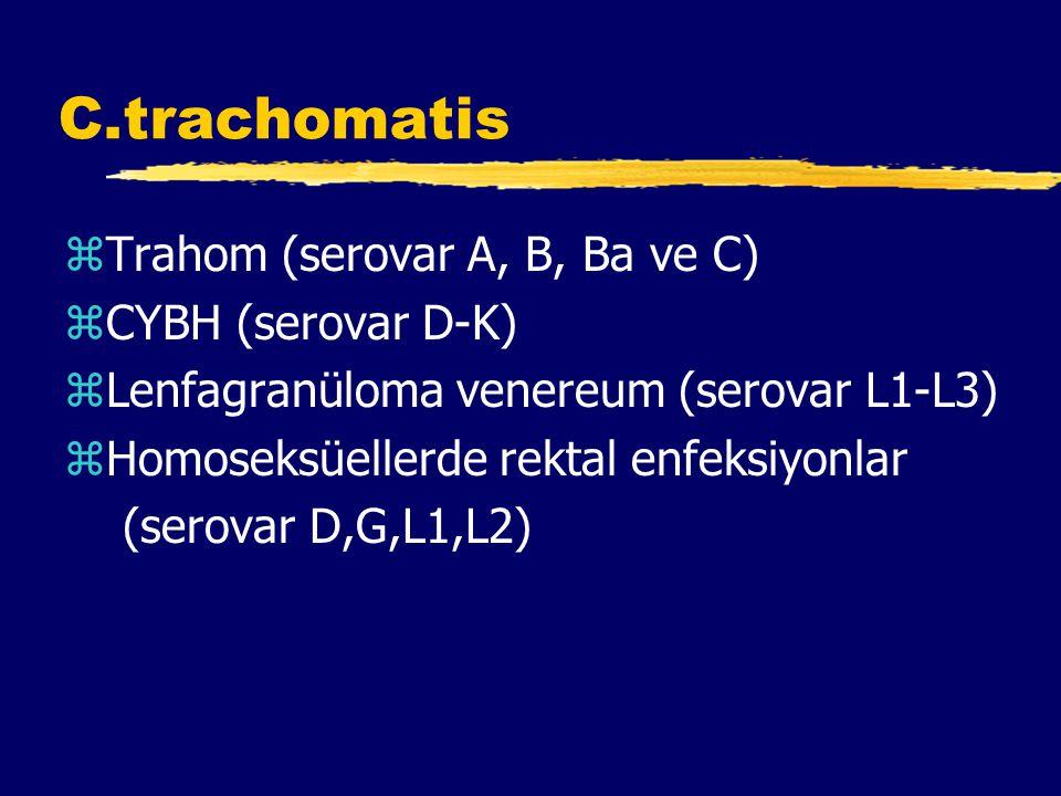 C.trachomatis Trahom (serovar A, B, Ba ve C) CYBH (serovar D-K)