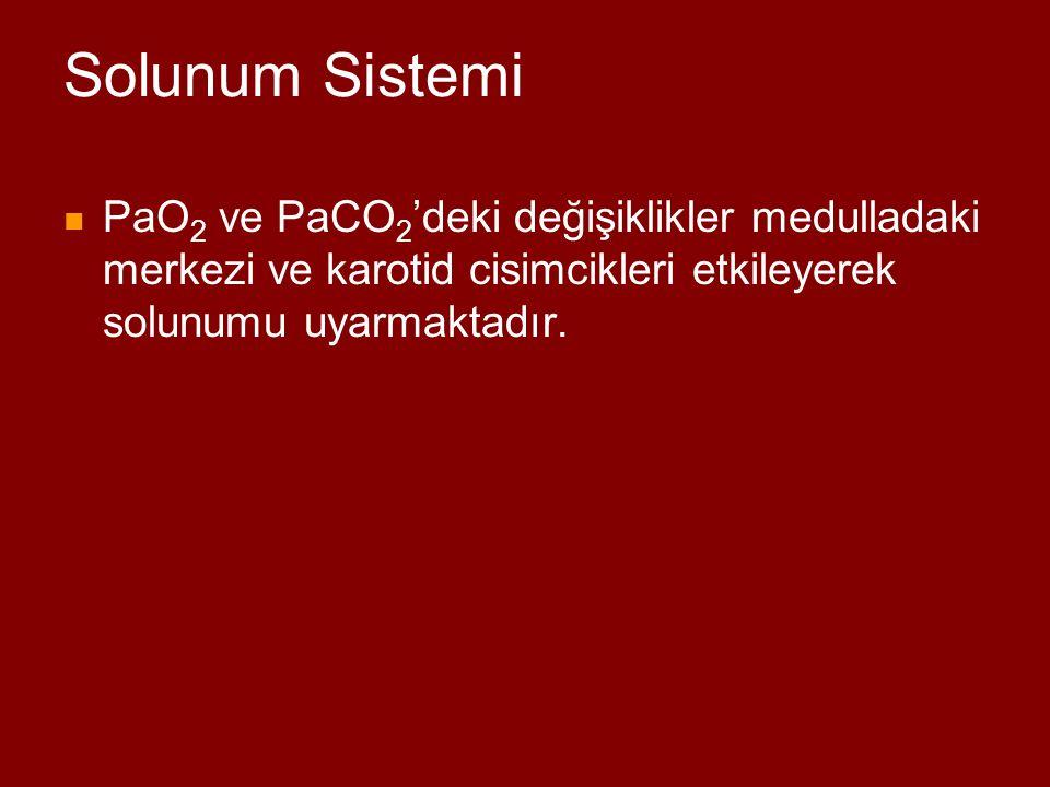 Solunum Sistemi PaO2 ve PaCO2'deki değişiklikler medulladaki merkezi ve karotid cisimcikleri etkileyerek solunumu uyarmaktadır.