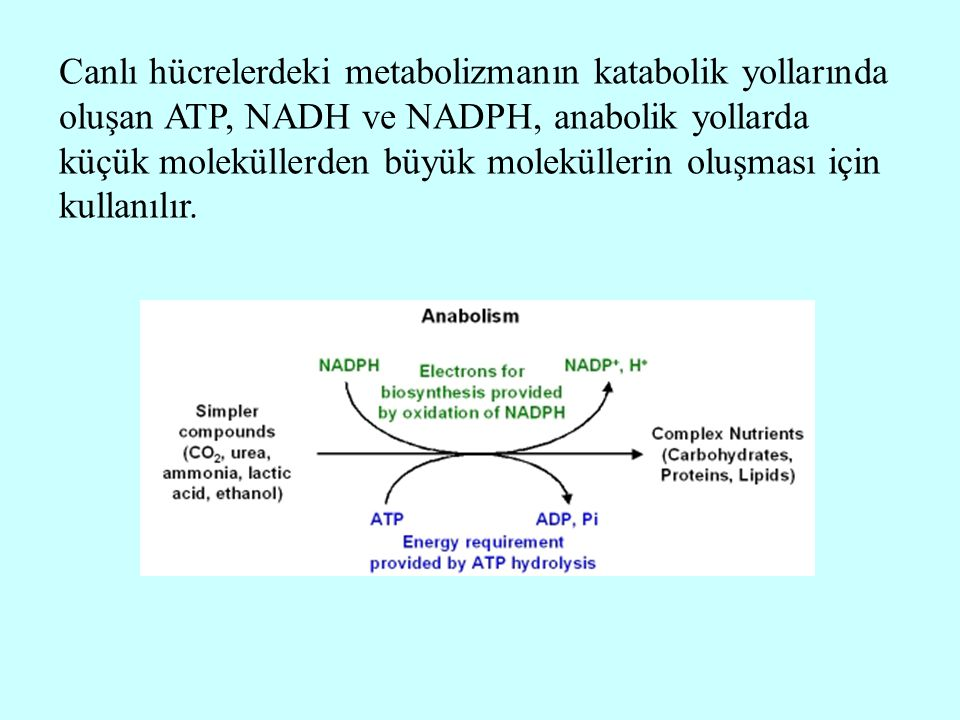 Canlı hücrelerdeki metabolizmanın katabolik yollarında oluşan ATP, NADH ve NADPH, anabolik yollarda küçük moleküllerden büyük moleküllerin oluşması için kullanılır.